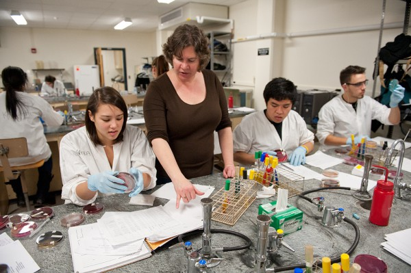 Undergraduates culturing, isolating and identifying unknown microbes.
